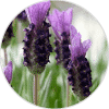 lavanda cantueso ingrediente cosmética natural