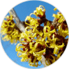 hamamelis ingredientes Dehesia Cosmética EcoNatural